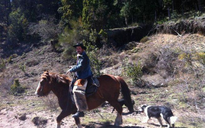 羊の群れに向かうガウチョとボーダーコリー