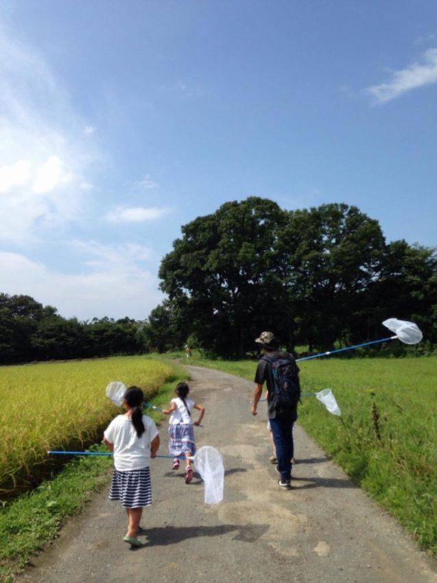 夏の虫取り。子供たちがのびのびできる自然がここ三つ又沼ビオトープには残っています。写真:松並三男