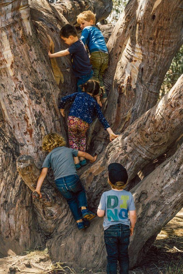 〈ワイルド・ルーツ〉の4 つの「教室」に含まれるのは、森を流れる小川、農園、砂岩の山、草原に囲まれたオークやユーカリの巨木。教室は毎月移動させ、子供たちにそれぞれの季節にそれぞれの場所を親しませる時間を与える。Photo: Kyle Sparks