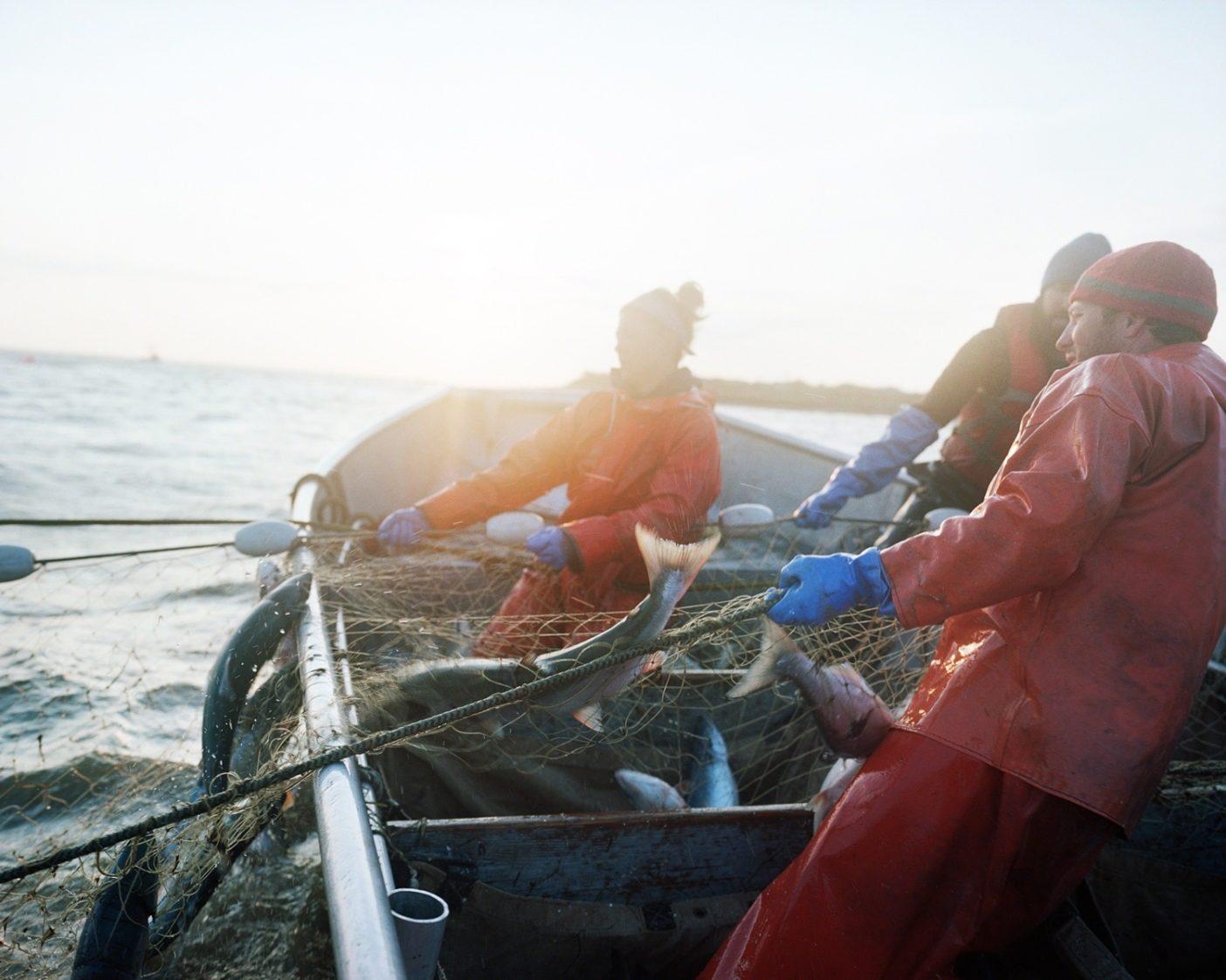 サーモンでいっぱいの固定網を引き寄せる商業漁師。アラスカ州ブリストル湾。写真:Corey Arnold