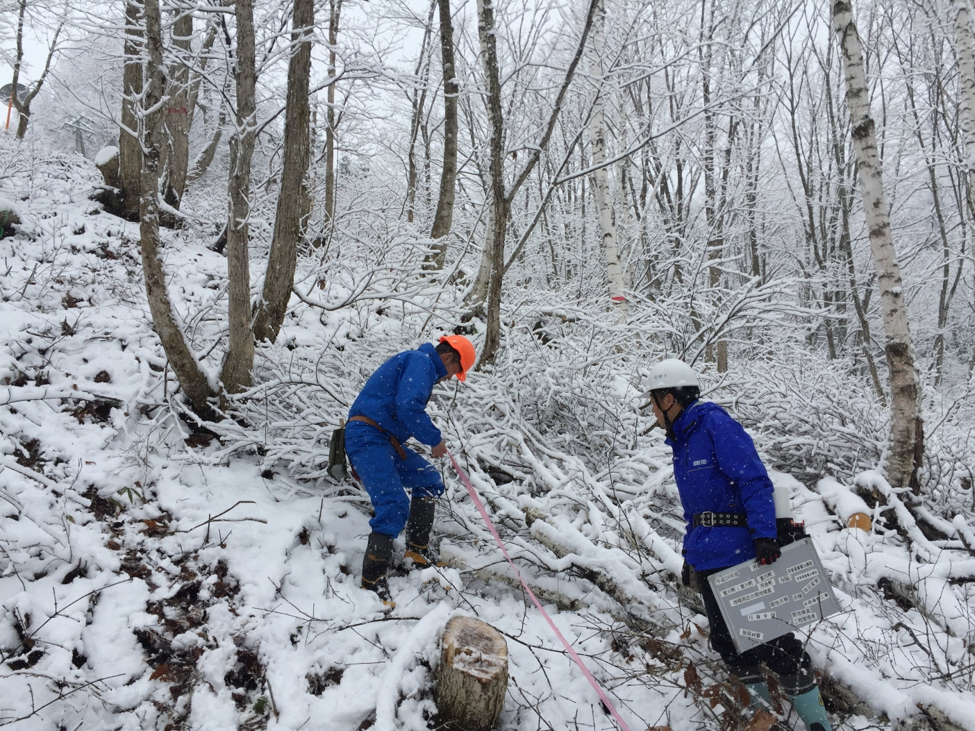 広葉樹の伐採作業を検査。経済的に価値の高い木を将来に残しつつ収穫作業の収益を確保するのはいつも至難の業だ。飛騨市神岡町。Photo: Mikihiro NAKAMURA