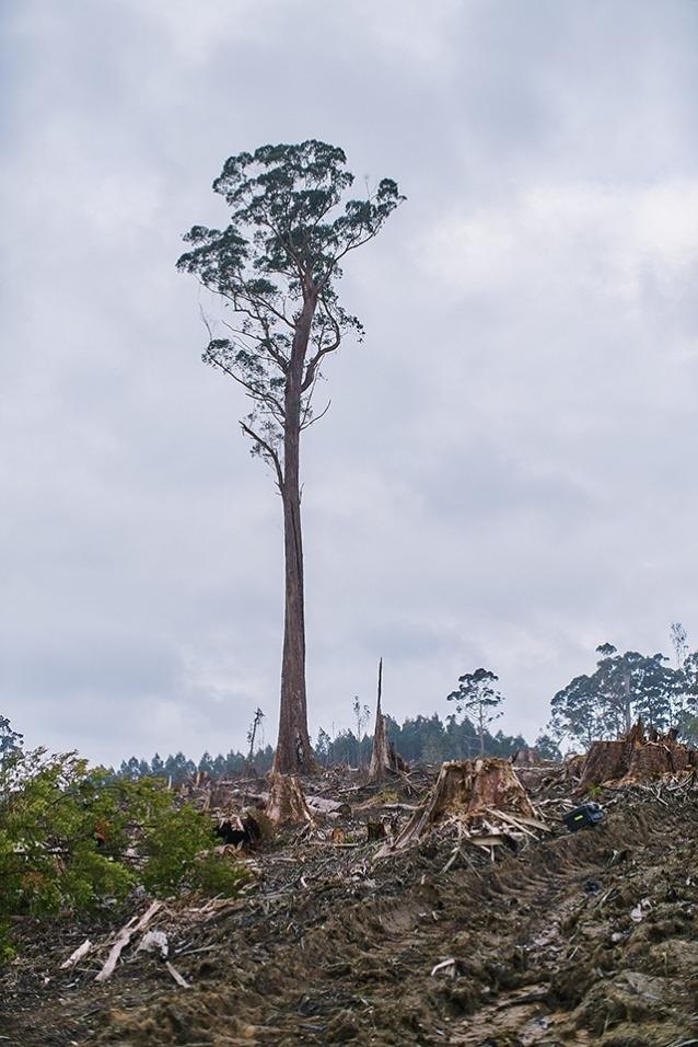 タスマニアをこれほどまでに野生にしているその資質が、タスマニアを利益を生み出すものにもしている。Photo: Mikey Schaefer