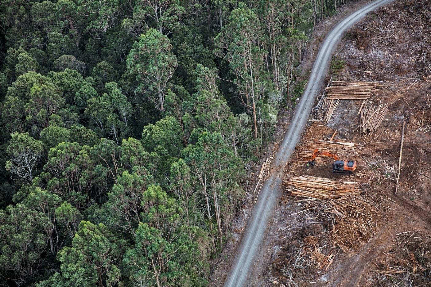 片側は森、もう片側は皆伐。Photo: Krystle Wright