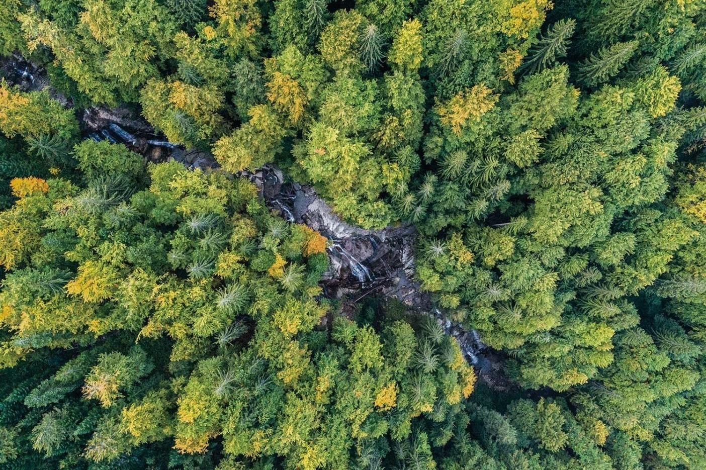 ジェリェズニツァ川はヨーロッパ大陸に残された最後の原生河川のひとつ。 2 基の水力発電用の分水ダム建設案が実現すれば、完全に枯渇するという危機に直面している。Photo:Andrew Burr