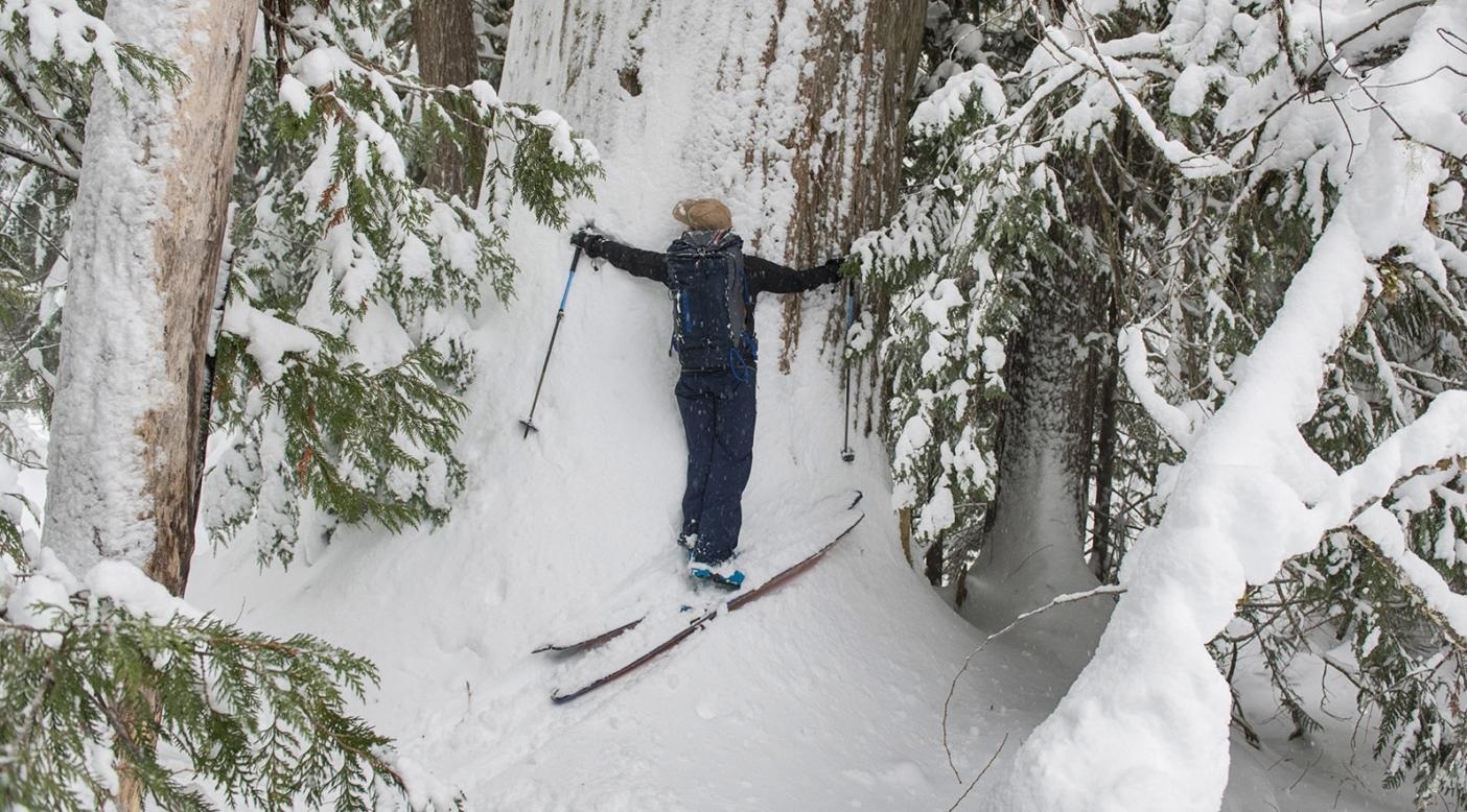 デブ・マクキロップいわく、最高の木は抱擁できない。「フォレスターにとっては、素晴らしい測定ツールとなる腕の長さを知っておくのは便利なことです」と彼女は言う。ブリティッシュ・コロンビア内陸のベイスギの森で、スキー中にデブの例にしたがって愛を送るリア・エヴァンス。 Photo: Garrett Grove