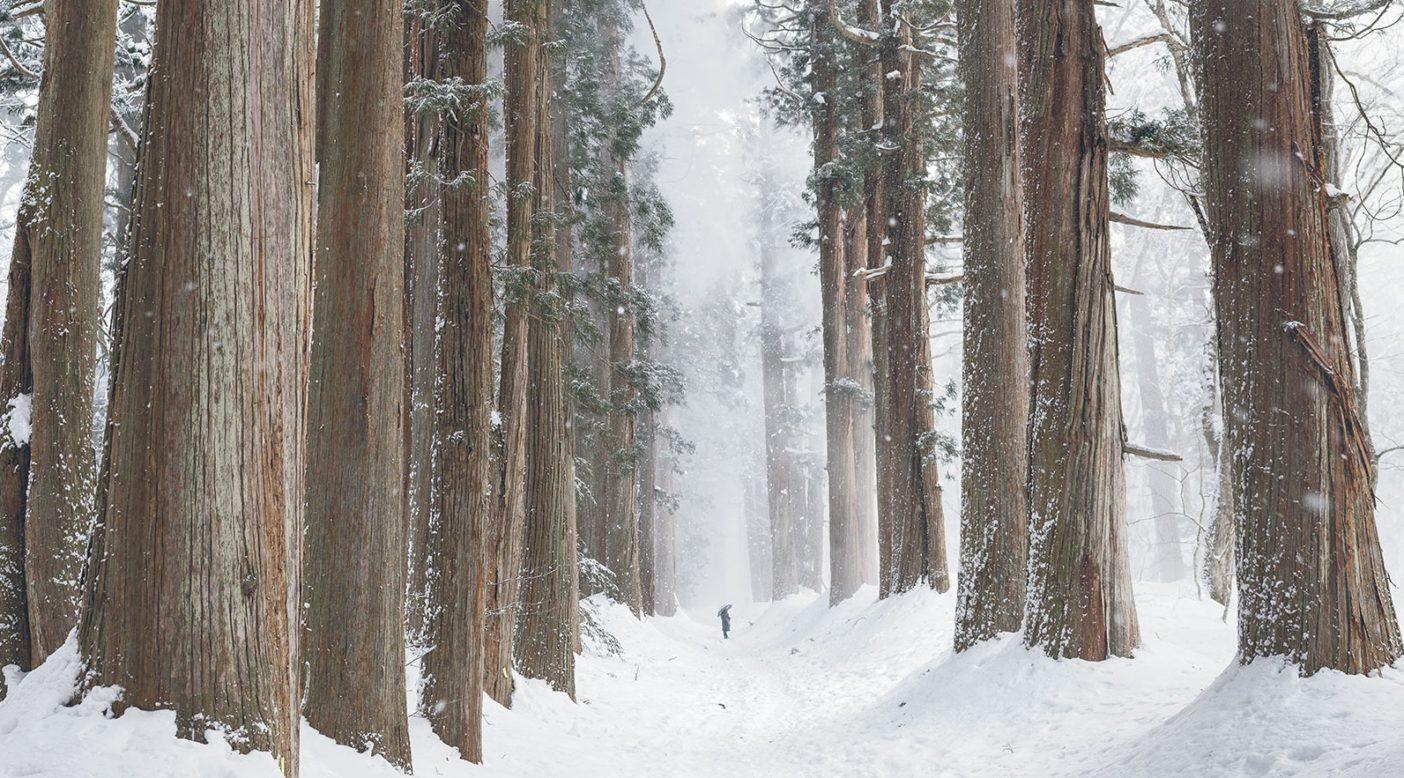 日本固有種のスギがそびえ立ち、戸隠神社へとつづくこの杉並木の参道には、東京からも樹木愛好家が訪れ、そこを歩きながら自然への敬意を払いつつ、守護を祈願する。長野県 Photo: Garrett Grove
