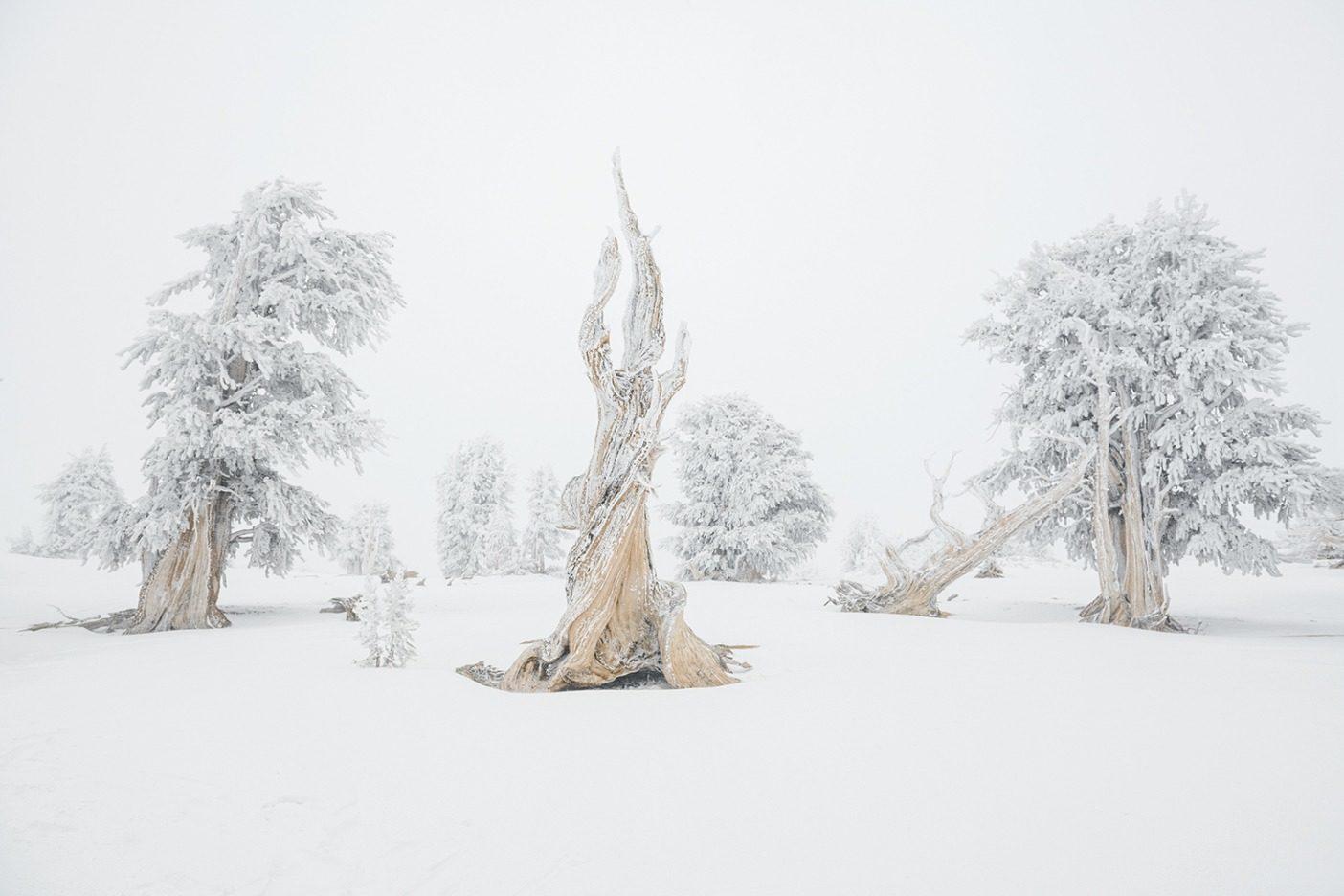 この2日前は完全に茶色だった森の地面に、急速に移動する嵐がもたらした適度な雪により、冬期にはめったに探検されないグレート・ベイスン国立公園へと撮影隊がスキーで潜入することができた。ネバダ州ホワイト・パイン郡 Photo: Photo: Garrett Grove