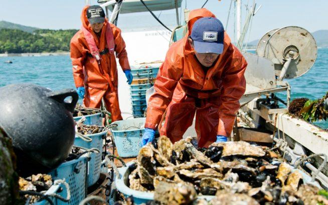 美しい志津川湾でカキ漁を行う後藤清広さん・伸弥さん親子。写真:五十嵐 一晴