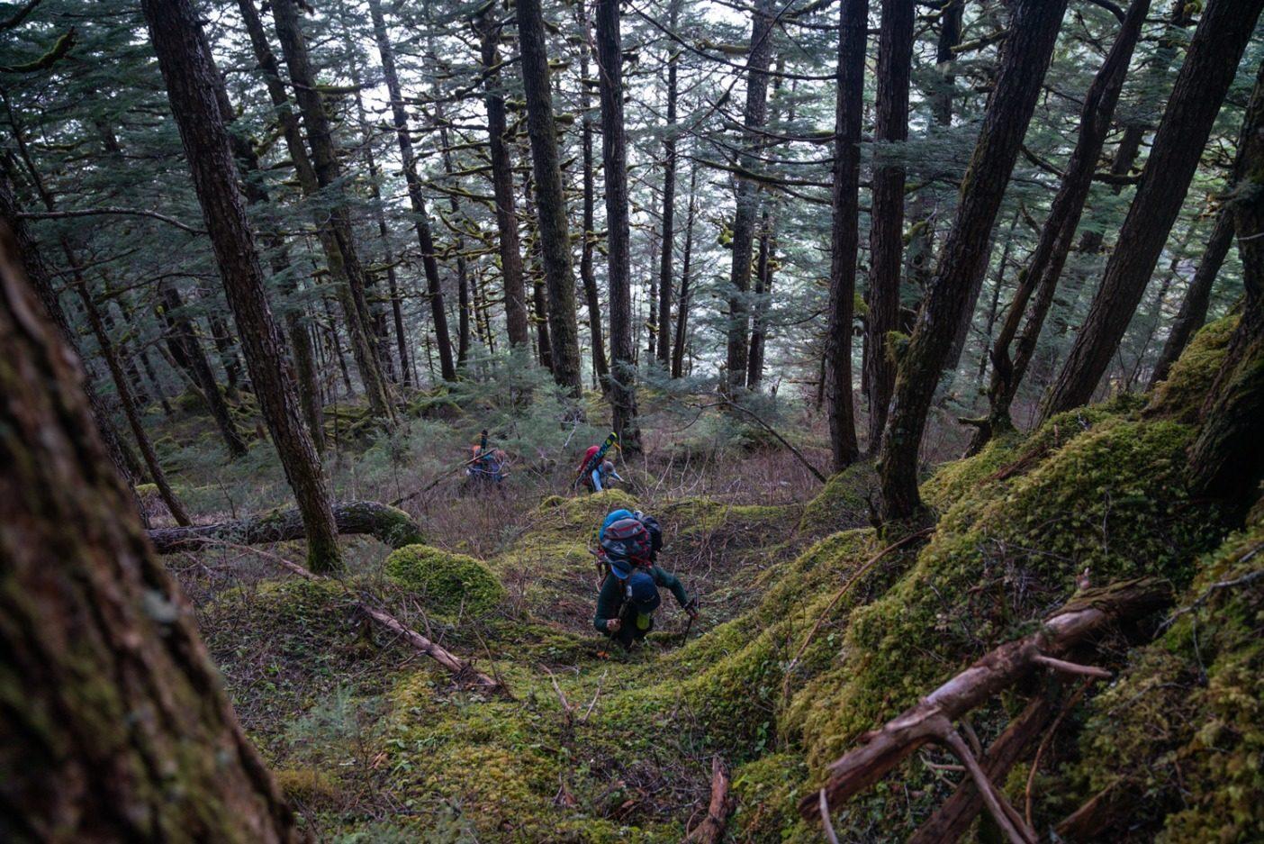 スティキーンの高山への登りがスムーズにいくことはめったにない。凍結した土、老木の森、ハンノキ、技術を要するスキニング、そして急峻な地形が滑降場所への到達を困難にする。Photo: Jasper Gibson