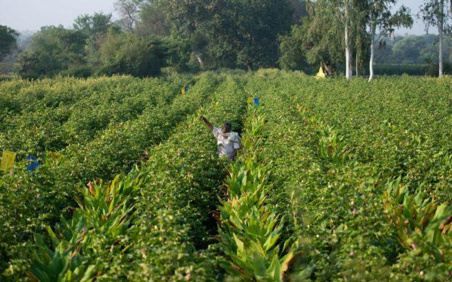 パタゴニアは2025年までにカーボンニュートラルになるという目標を設定した。これを達成するため、自然が意図する方法で食物や繊維を栽培するなど、私たちはさまざまな手段を試している。インドの環境再生型有機農業のコットン畑。Photo : Hashim Badani