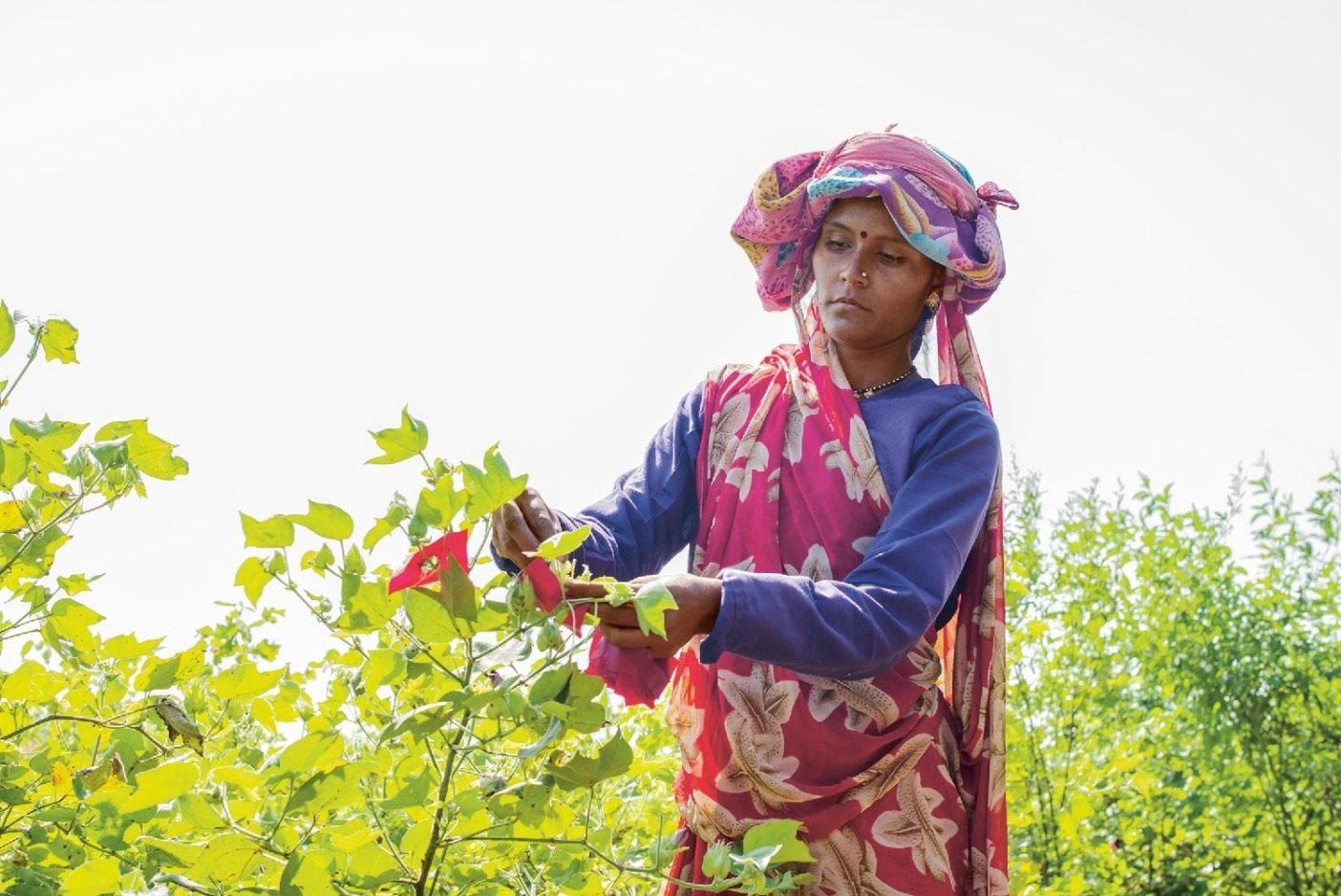 インド、カイラッシュ・パティダールのオーガニックコットン農場の労働者。パタゴニアのパートナーであるインドの農家の多くは、激しい豪雨とそれにつづく長い乾季という異常気象の変化に気づいている。収穫量が影響を受けると農家の収入も減る。Photo:Tim Davis