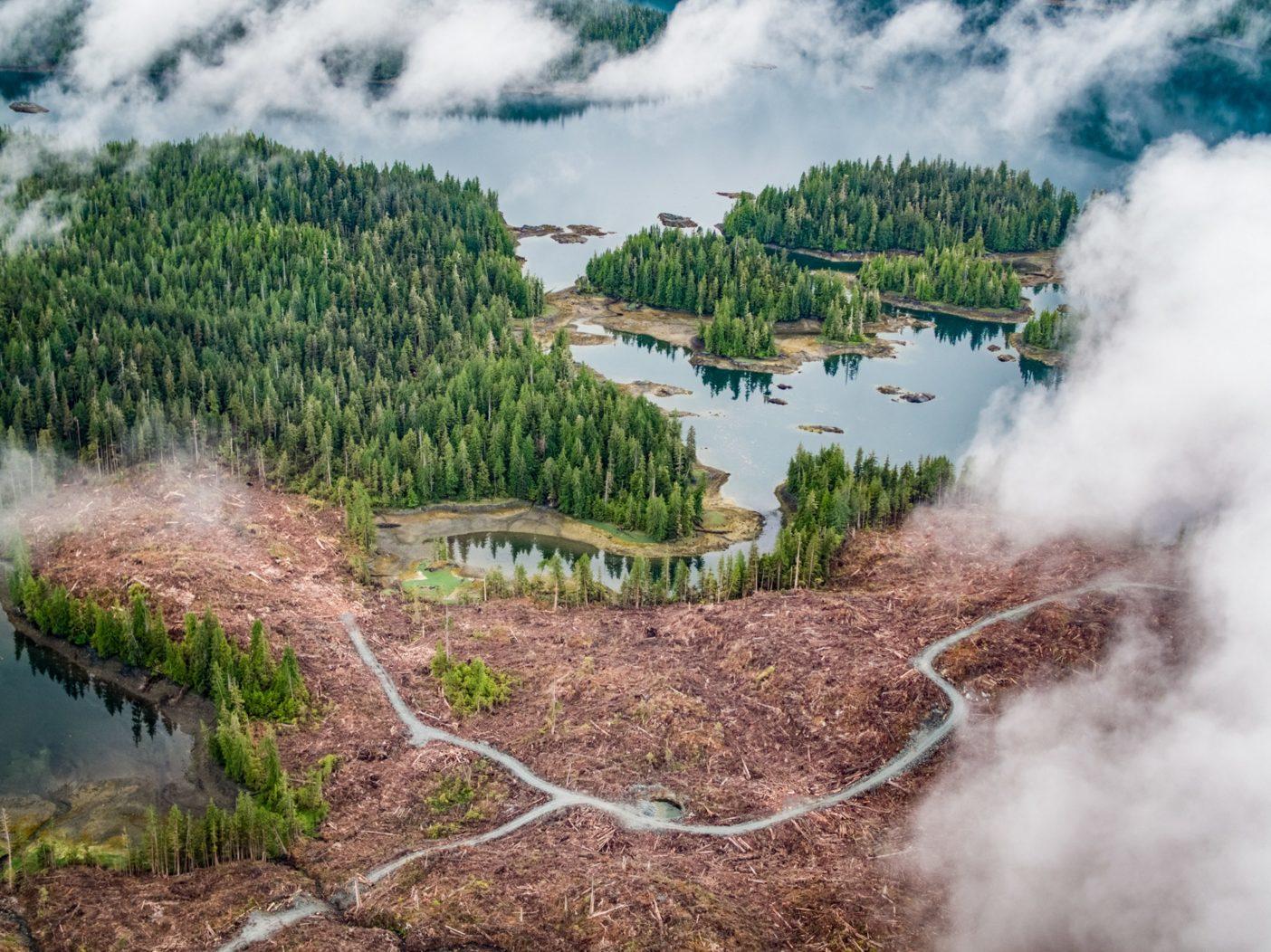 過去1世紀のあいだ、皆伐はトンガスの風景を変貌させてきた。地元の住民たちはいま、彼らに残された原生林を守るために闘っている。Photo:Colin Arisman