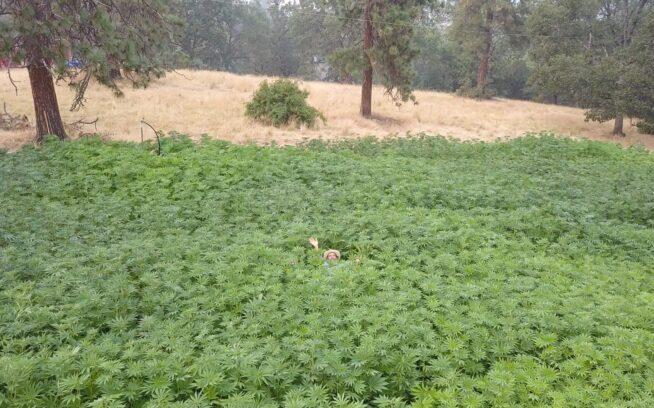 ニューメキシコ州のファンキー・ビュート・ランチで、10年前には懲役10年から終身刑だったかもしれない作物を育てる行為で、家族と地元地域、そして種に仕えるダグ・ファイン。photo:Doug Fine提供