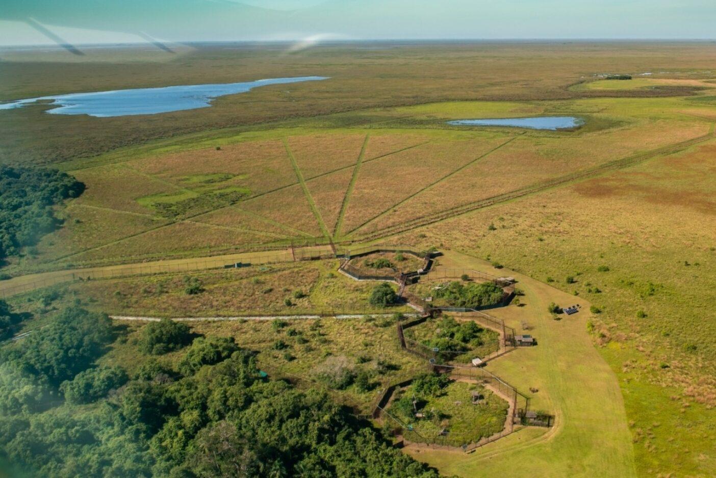 #Denlife:イベラ国立公園の中心の島のジャガー・リイントロダクション・センターにあるこれら4つの6角形の囲いには、ジャガーが収容されている。このジャガーは70年後はじめてイベラの湿地帯を自由に徘徊する新世代の雄親となることが期待されている。