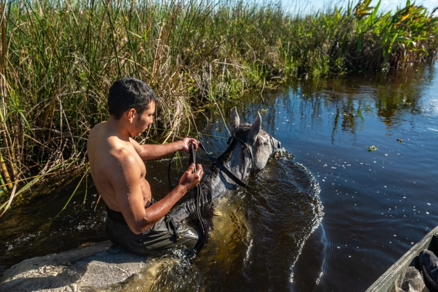 水が深くなると、フェデリコは馬に乗るか、馬と一緒に泳ぐこともある。亜熱帯性気候のため、泳ぐことは馬と人間の両方にとって喜ばしいことだ。