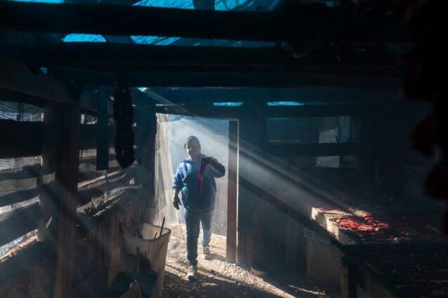 アラスカのグウィチャア・ジー(フォート・ユコン)の貯蔵庫で、カリブーの肉を乾燥させるケリー・フィールズ。カリブーはヴァシュラジ・クーの家族が送ってきたもの。今日、ポーキュパイン・カリブー群が移動するのは、グウィッチンの15の村のうち、たった数村のみ。多くの家族がカリブーを見かけなくなった村の親戚や友人にカリブーの肉を送っている。サーモン、ムース、ベリーも同様だ。Photo:Keri Oberly