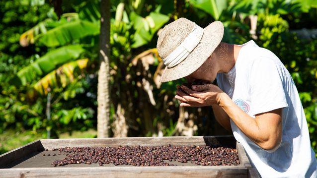 収穫した豆を我が子のように丁寧に愛でる宮川さん。小笠原の自然のエネルギーと愛情をたっぷり受けたコーヒー豆だ。Photo:Reo Fukumoto