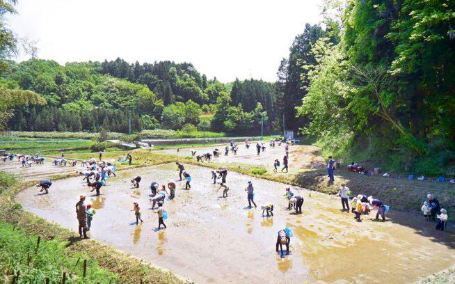 リジェネラティブ・オーガニックで目指す日本の食と農業の根源的な転換